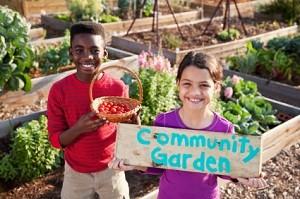 Starting A Community Vegetable Garden Little Bit Of Green